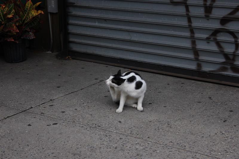 KittyKät